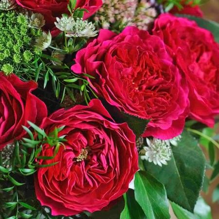 Роза английская Дарси