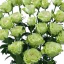 Роза спрей Лувиана