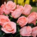 Роза чайно-гибридная Ангажемент