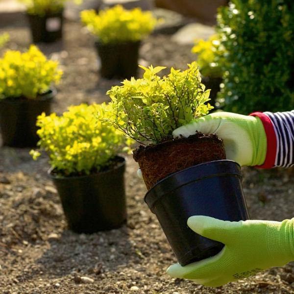 Благоустройство и озеленение территорий